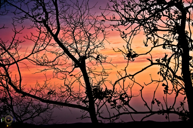HSNP Tree silhouettes against the sunset sky