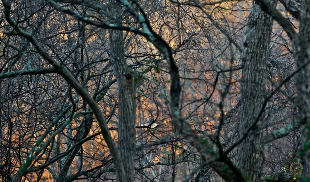 HSNP Nroth Mountain through the Trees at Sunrise