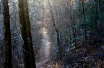 HSNP Upper Dogwood Trail Winter