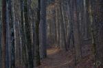 SONY DSCHSNP Upper Dogwood Trail Winter