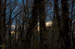 HSNP Upper Dogwood Trail Winter Sunset