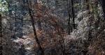 HSNP Upper Dogwood Trail Winter Tree Seeds