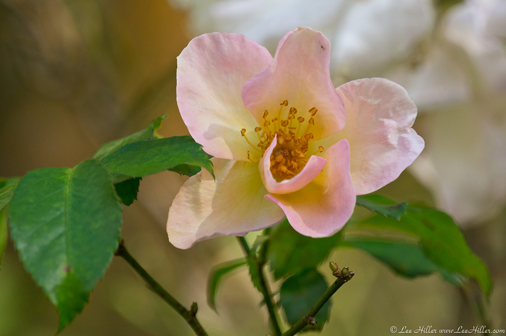Hope blossoms in the light…