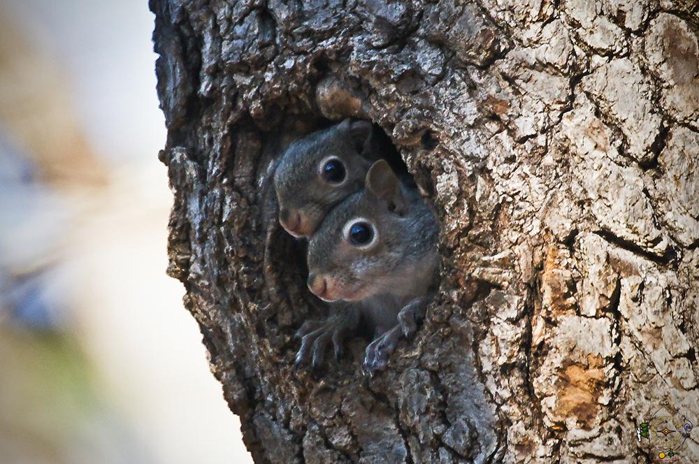 Nature's Beautiful Winter Babies