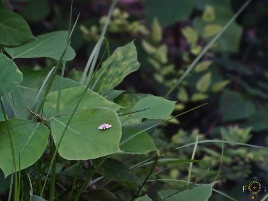Tiny Moth on a Leaf